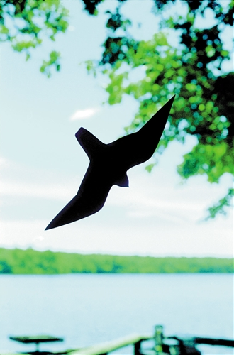 Bird Saver Silhouette Window Clings,Backyard Nature Products,NP160