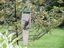 Recycled Double Cake Suet Feeder Green,SNPS