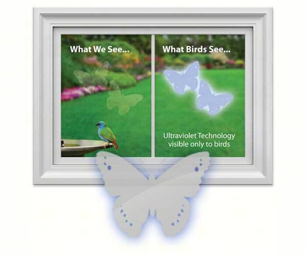 Window Alert Butterfly,WINDA3