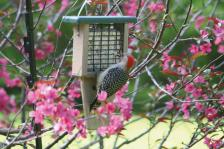 Recycled Single Suet - Green,Backyard Nature Products,SNTPG