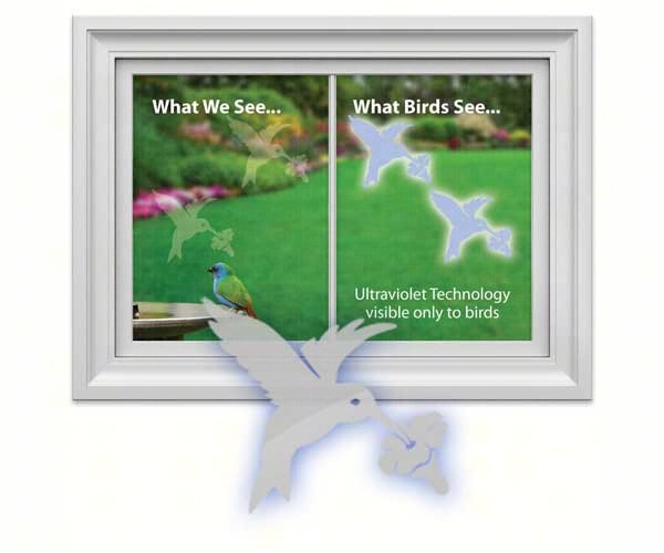Window Alert Hummingbird,Window Alert,WINDA5